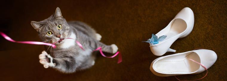 ネコとサムシングブルー