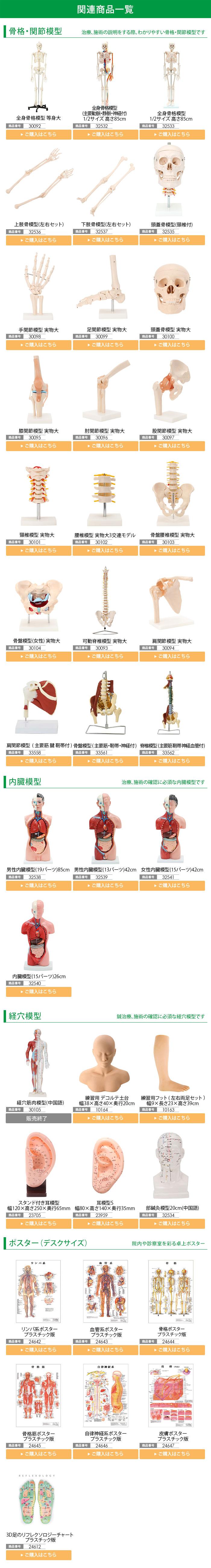 骨格模型関連商品一覧