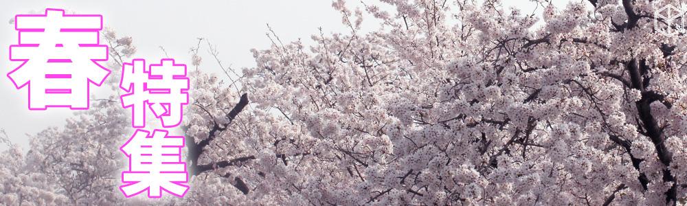 aimcube 春 spring 特集