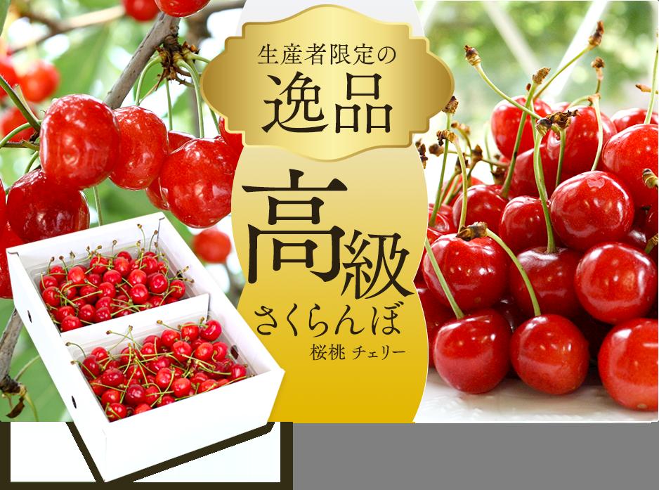 高級さくらんぼ(桜桃 チェリー...