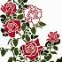 庭にバラ 赤色