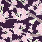 桜の花 地紫