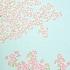 空に桜満開