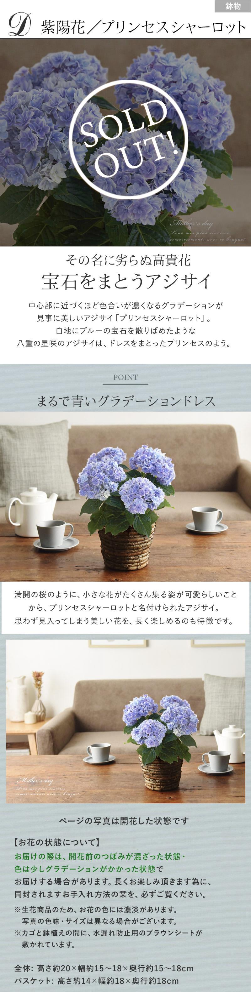 D紫陽花/プリンセスシャーロット