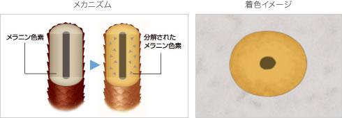 脱色剤のメカニズムと着色イメージ