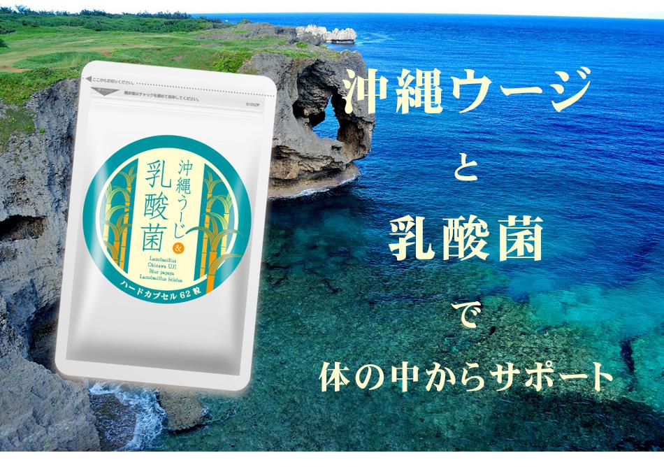 沖縄ウージと乳酸菌