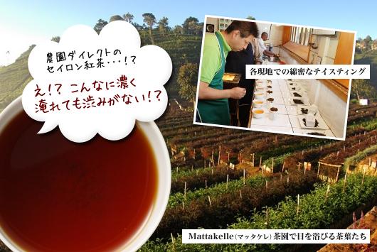農園ダイレクトのセイロン紅茶!?え!?こんなに濃く淹れても渋みがない!?