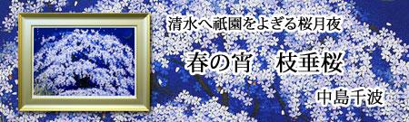 中島千波 春の枝垂桜