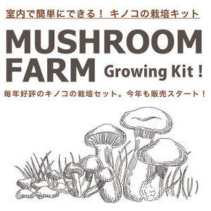 マッシュルーム 栽培セット