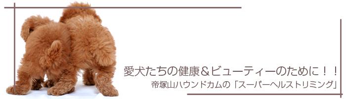 愛犬たちの健康&ビューティーのために!!