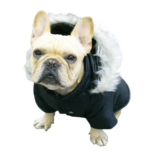 Dog Coats For French Bulldogs