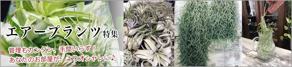 飾って楽しめるインテリア植物 エラプランツ特集