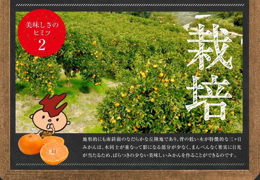 みかんの栽培方法