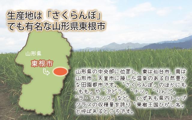 マコモダケ 山形県東根市