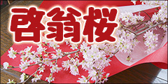 啓翁桜 トップバナー
