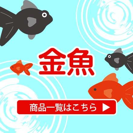 金魚用品一覧