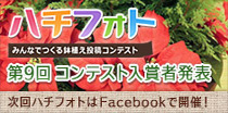 植  木鉢の写真コンテスト