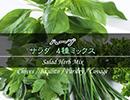 ハーブの種 サラダミックス
