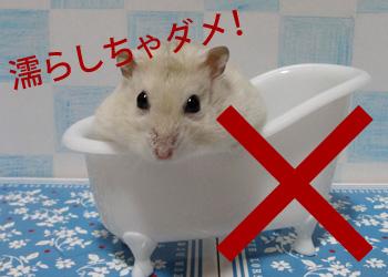 お風呂NG絶対ダメ!