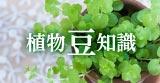 植物豆知識