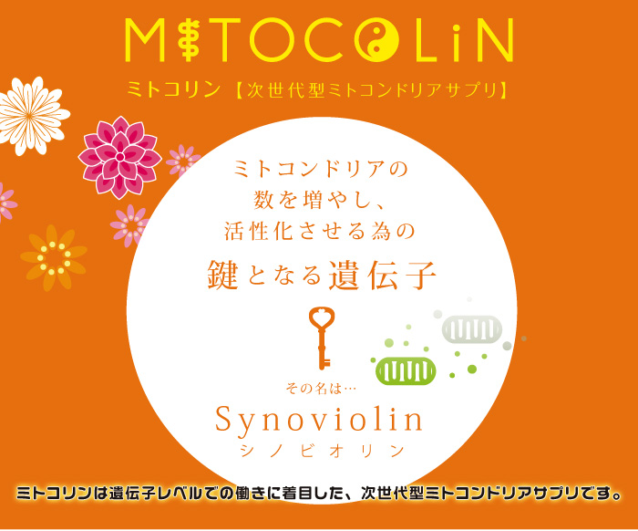 ミトコンドリアを増やして活性化ーミトコリン