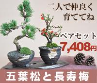 盆栽ペアセット