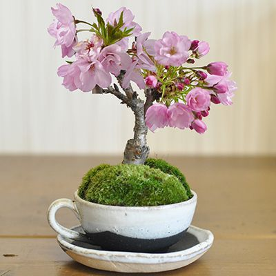 桜ティーカップ