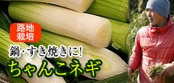 すき焼きねぎに最適!和歌山で自然の恵みを存分に浴びたちゃんこ葱
