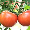 土佐市産 フルーツトマト