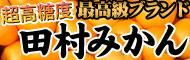 田村みかん産地直送