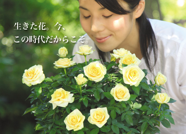生きた花。今、この時代だからこそ。