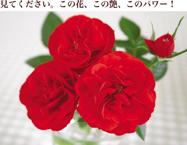 見てください。この花、この艶、このパワー!