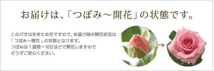 お届けは、「つぼみ〜開花」の状態です。