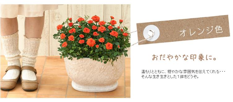 おだやかな印象に。温もりとともに、穏やかな雰囲気を伝えてくれる・・・そんな生き生きとした1鉢をどうぞ。