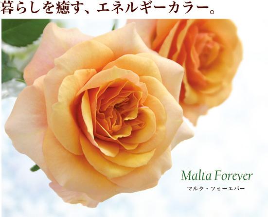 暮らしを癒す、エネルギーカラー。マルタ・フォーエバー