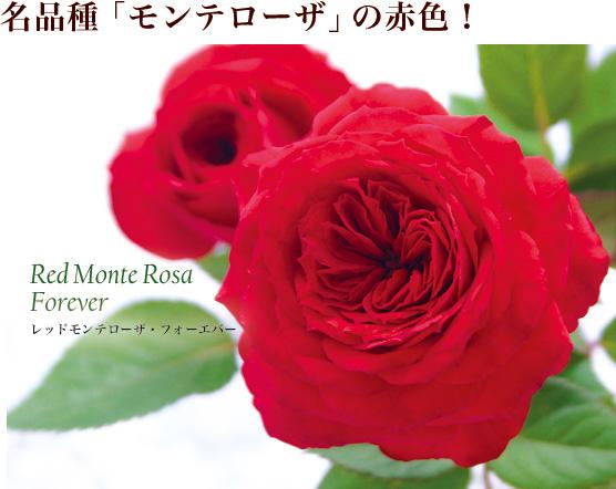 名品種「モンテローザ」の赤色!
