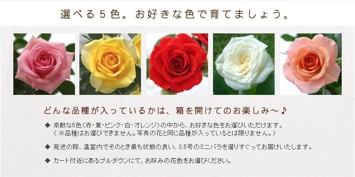 選べる5色。お好きな色で育てましょう。