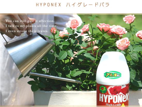 HYPONEX ハイグレードバラ