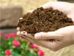 専用培養土
