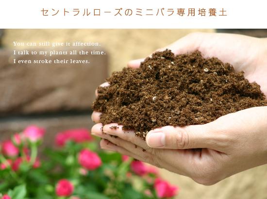 セントラルローズのミニバラ専用培養土