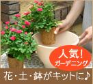 ガーデニング|花・土・鉢がキットに♪