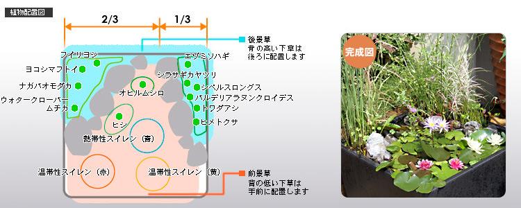 植物配置図