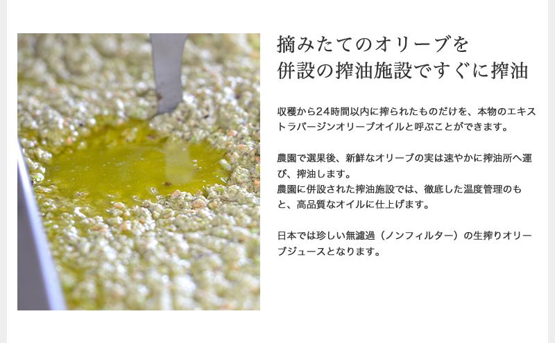 摘みたてのオリーブを併設の搾油施設ですぐに搾油