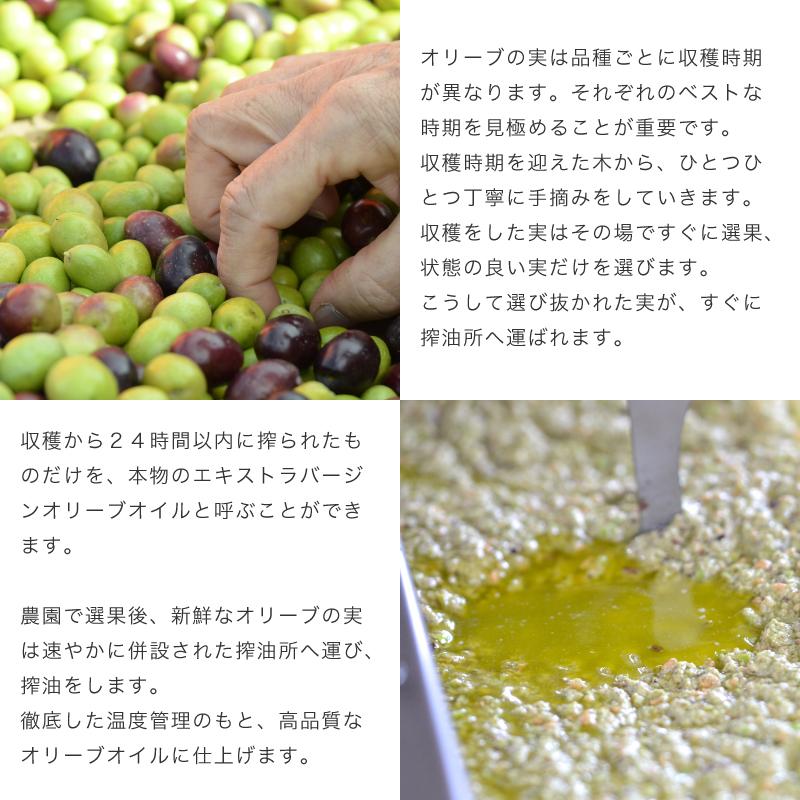 国産オリーブオイル|静岡産エキストラバージンオリーブオイル
