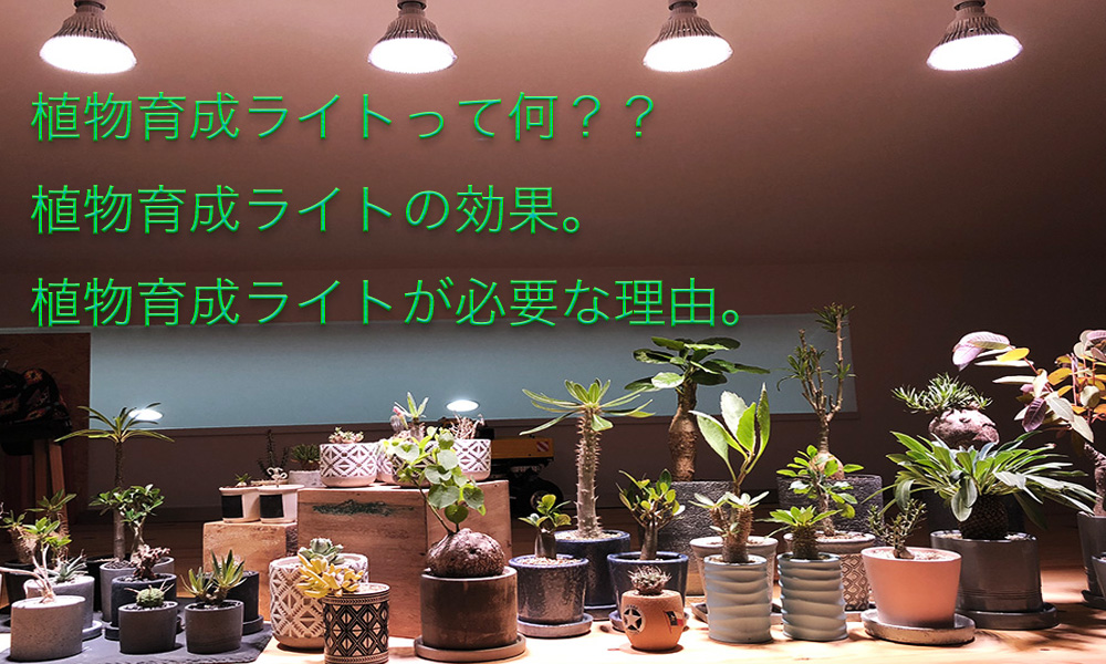 植物育成って何?