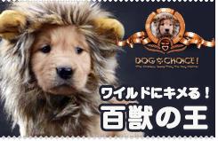 ライオンに変身! 耳付き帽子