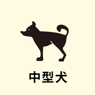 中型犬一頭