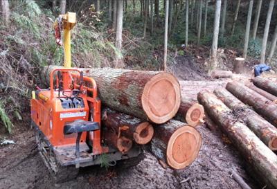 たった一本の太径木のために、多くの貴重な木々を犠牲にする行為は木材に関わる仕事に就く人間が絶対にやってはいけない行為です