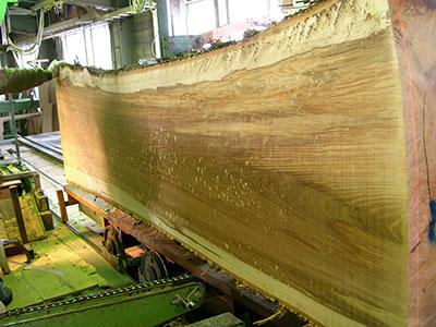 一本の丸太からたった一枚、せいぜい1~2枚しか取れない板が運命の樹レアです