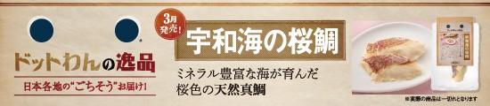 宇和海の桜鯛